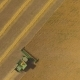 Aerial View on the Combine Working on the Large Wheat Field - VideoHive Item for Sale