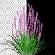 Flowering Bush - VideoHive Item for Sale