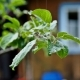 Apple Tree in Summer Rain - VideoHive Item for Sale