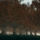 Gloomy Autumn Forest with Fog - VideoHive Item for Sale