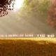 Bright Autumn Forest with Sun Rays - VideoHive Item for Sale