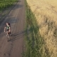 A Cyclist Rides Along the Road Between Agricultural Fields - VideoHive Item for Sale