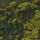 Aerial View on the Summer Trees and Bushes - VideoHive Item for Sale
