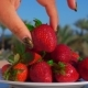 Hand Puts a Large Juicy Strawberry From a Plate - VideoHive Item for Sale