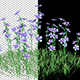 The Petunia Bush - VideoHive Item for Sale