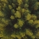 Aerial View on the Summer Trees and Forest - VideoHive Item for Sale