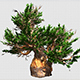 Tree With A Thick Trunk - VideoHive Item for Sale