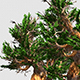 Two Old Trees - VideoHive Item for Sale