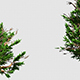 Trees With Long Branches - VideoHive Item for Sale