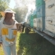 the Beekeeper Working in the Apiary Bees Fly Swarm Multi Colored Beehive - VideoHive Item for Sale
