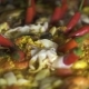 Traditional Spain Food Paella with Mussels, Shrimps, Calamari and Vegetables in Pan. . Cooking - VideoHive Item for Sale