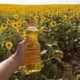 Video. Man Farmer Hand Hold Bottle of Sunflower Oil the Field at Sunset - VideoHive Item for Sale