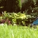 Man Cutting Garden Lawn With Electric Grass Mower - VideoHive Item for Sale