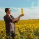 Man Farmer Hand Hold Bottle of Sunflower Oil the Field at Sunset. Man Farmer Agriculture Plastic - VideoHive Item for Sale