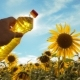 Farmer Holding a Plastic Bottle of Sunflower Oil in His Hand Field Sunlight.  Video. Blue Sk - VideoHive Item for Sale