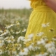 Woman Picking Up Flowers on a Meadow, Hand . Morning Light, Green Grass. Vintage - VideoHive Item for Sale