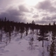 Next To Pine in the Winter Forest - VideoHive Item for Sale