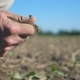 Male Farmer Hand Holds a Handful of Dry Ground and Checks Soil Fertility on the Field at Sunny - VideoHive Item for Sale