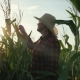 A Female Farmer with a Tablet in Her Hands in a Cornfield. The Farmer Examines the Corn and Records - VideoHive Item for Sale