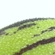Shooting of Whole Green Pepino - VideoHive Item for Sale