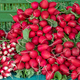 A heap of red radish - PhotoDune Item for Sale
