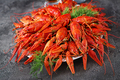 Crayfish. Red boiled crawfishes on table in rustic style, closeup. Lobster closeup. Border design - PhotoDune Item for Sale