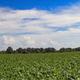 fresh beet tops - PhotoDune Item for Sale