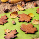 Autumnal symbolic cookies - PhotoDune Item for Sale