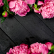Beautiful pink peony flowers on black background. - PhotoDune Item for Sale