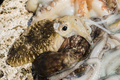 Just fished Octupus and cuttlefish. - PhotoDune Item for Sale
