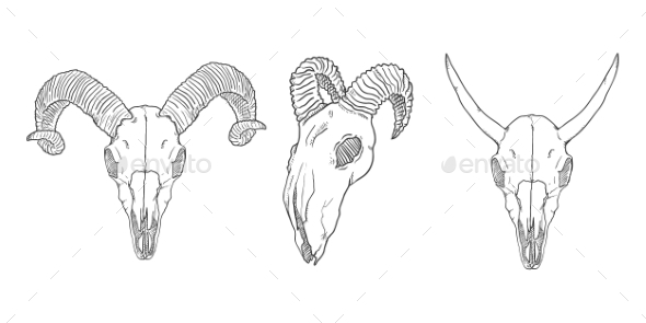 vector set of sketch horned animal skulls by nikiteev graphicriver