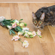 Domestic cat breed toyger dropped and broken glass vase of flowe - PhotoDune Item for Sale