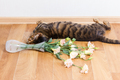 Cat breed toyger dropped glass vase of flowers on floor. - PhotoDune Item for Sale