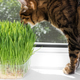 Domestic cat eating green grass on window sill - PhotoDune Item for Sale
