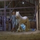 Woman Taking Horse Out of Stage - VideoHive Item for Sale