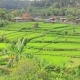 Aerial Video in an Amazing Landscape, with Drone, Above Rice Terraces in a Beautiful Day. - VideoHive Item for Sale