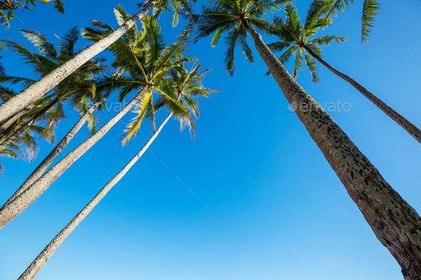 Palm - Stock Photo - Images