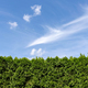 Green hedge and blue sky - PhotoDune Item for Sale