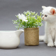 White British kitten and  flowers - PhotoDune Item for Sale