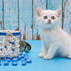 White British kitten and fish - PhotoDune Item for Sale