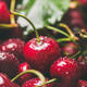 Fresh wet sweet cherries texture, wallpaper and background - PhotoDune Item for Sale