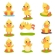 Yellow Duckling Character Set - GraphicRiver Item for Sale