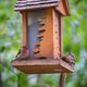 Red Finch and Chipmunk on a Bird Feeder - PhotoDune Item for Sale