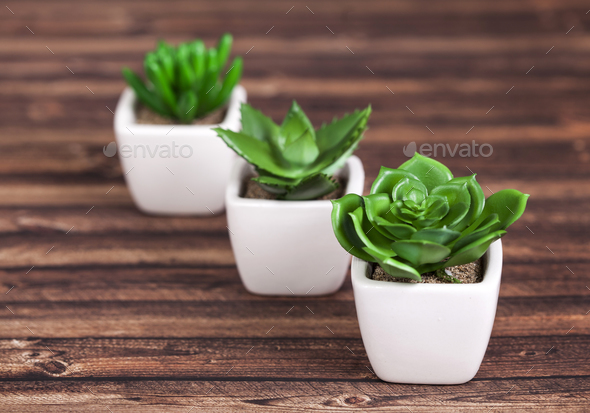 Green plants on wooden background - Stock Photo - Images