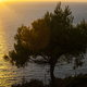 Tree in beautiful sunset over the sea - PhotoDune Item for Sale