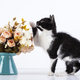 Kitten with flowers - PhotoDune Item for Sale