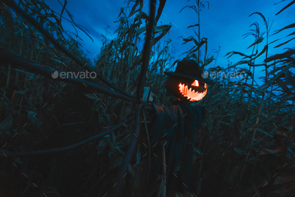 Scary pumpkin scarecrow in a hat - Stock Photo - Images