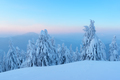 Dramatic wintry scene with snowy trees. - PhotoDune Item for Sale