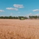 Harvester Working in a Field at sunset - VideoHive Item for Sale