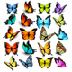 Collection of Colorful Butterflies - GraphicRiver Item for Sale